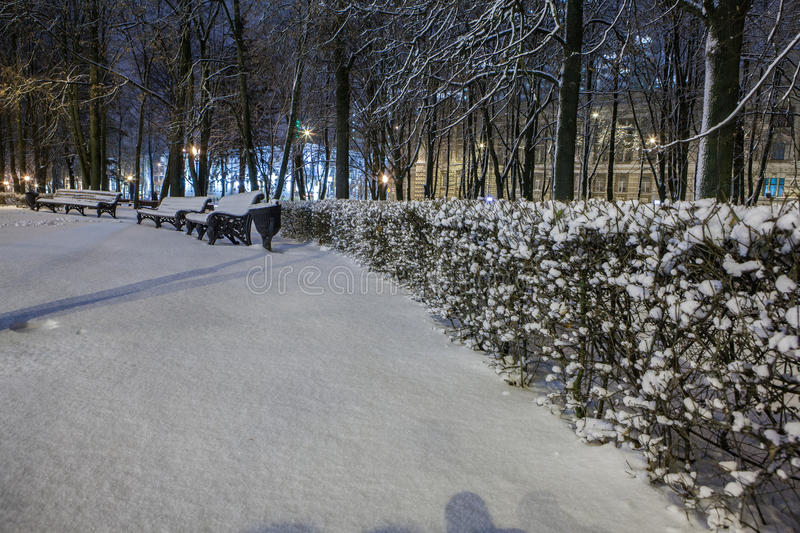 Download Winter in the night city stock photo. Image of shadows - 83712564