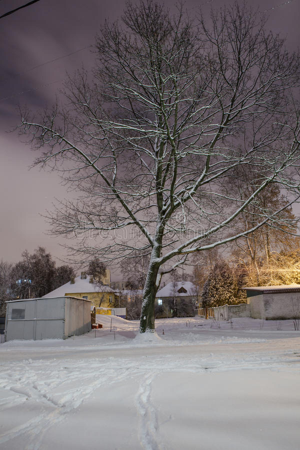 Download Winter in the night city stock image. Image of blizzard - 83714431