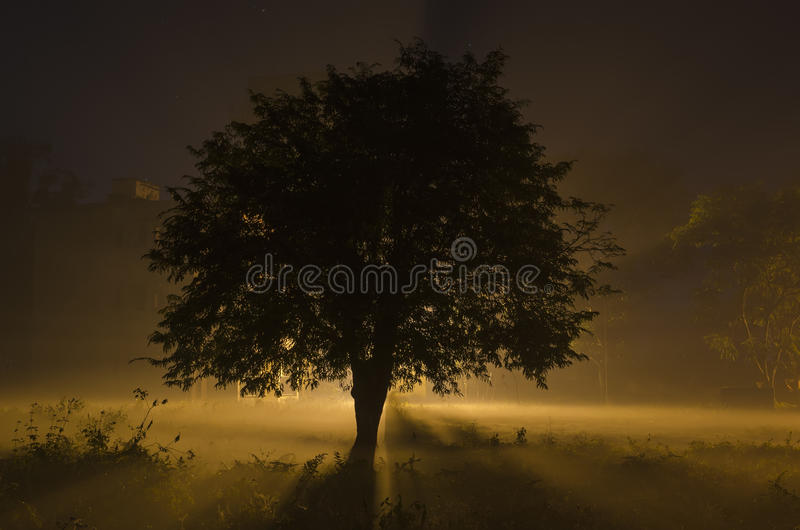 Alone Tree And Moon In Night Stock Image Image Of Fairy