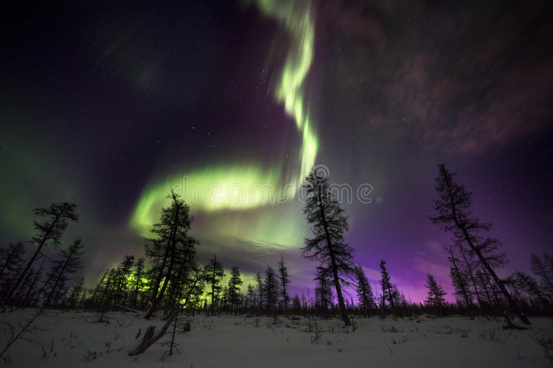 Winter night landscape with forest, road and polar light over the trees. royalty free stock photo