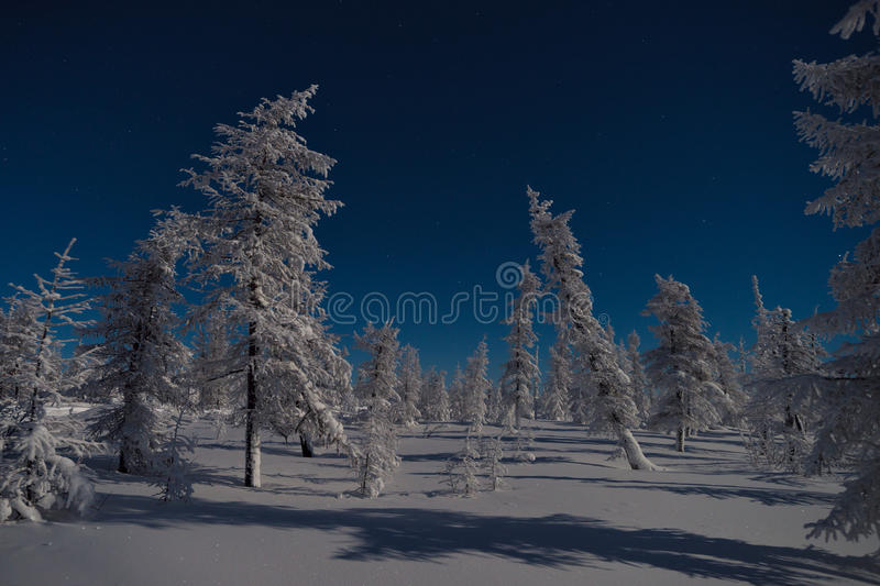 Winter night landscape with trees, road and snow. royalty free stock images