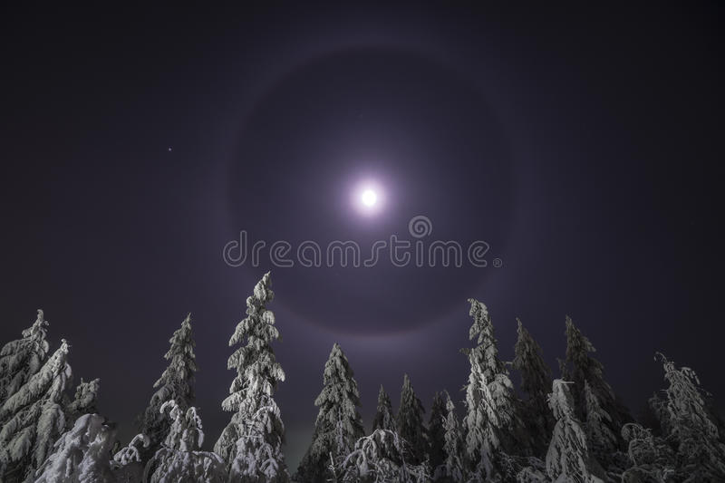 Winter night landscape with trees, road and snow. stock image