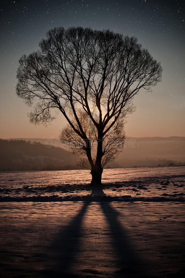 Winter night. With leaf-less tree royalty free stock photos
