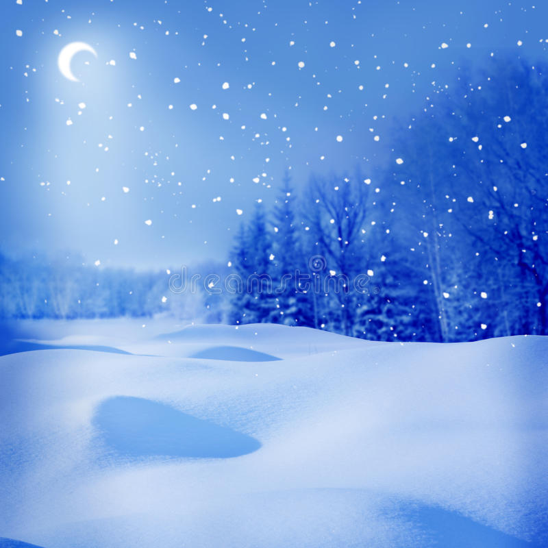 Winter night. With moon, spruce trees and snow royalty free stock images