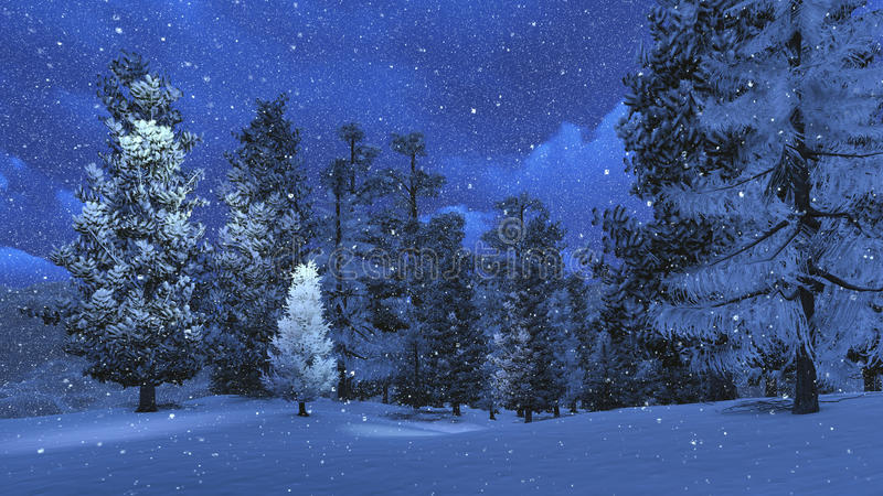 Winter Night In The Snowy Pinewood Stock Photo Image