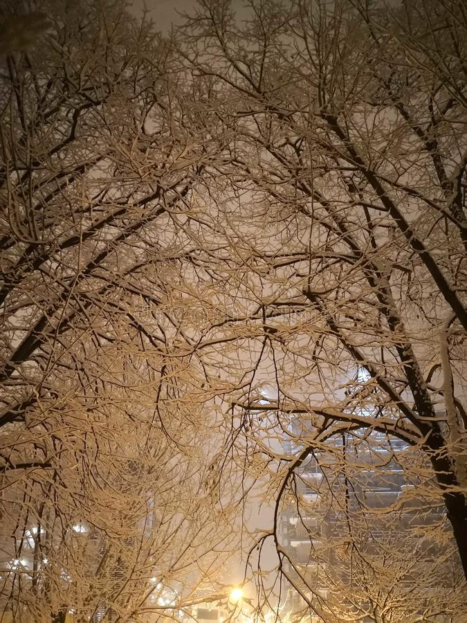 Winter night. Trees full of snow royalty free stock images