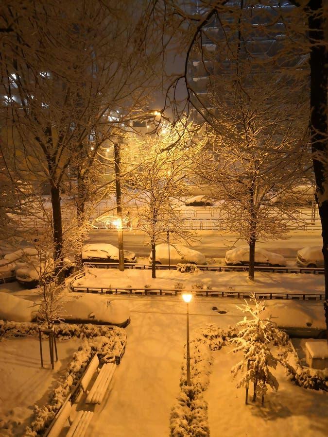 Winter night. White winter night stock photo