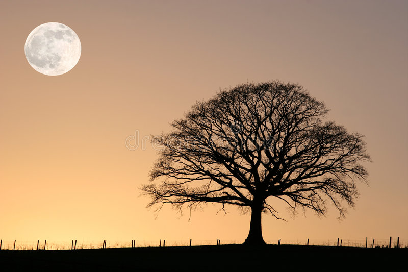 Winter Oak And Full Moon Royalty Free Stock Image