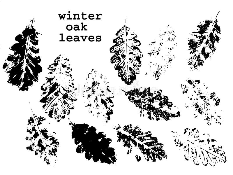 Winter oak leaves royalty free stock images