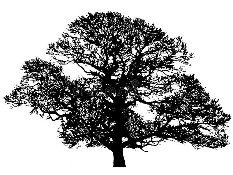 Winter Oak Silhouette vector illustration