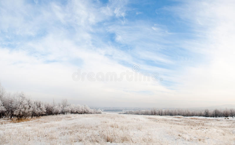 Winter panorama with beautiful blue sky. And trees in snow stock photography