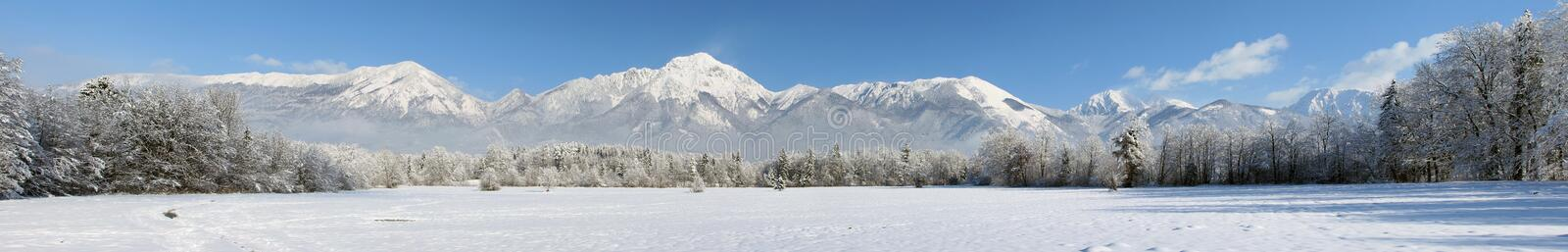 Winter panorama of forest and mountains royalty free stock images
