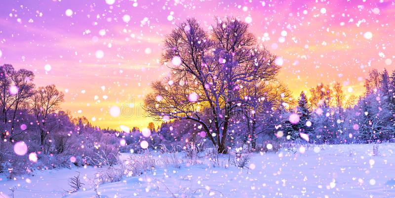 Winter panorama landscape with forest, trees covered snow and sunrise. Winterly morning of a new day. purple winter landscape with sunset, panoramic view royalty free stock images