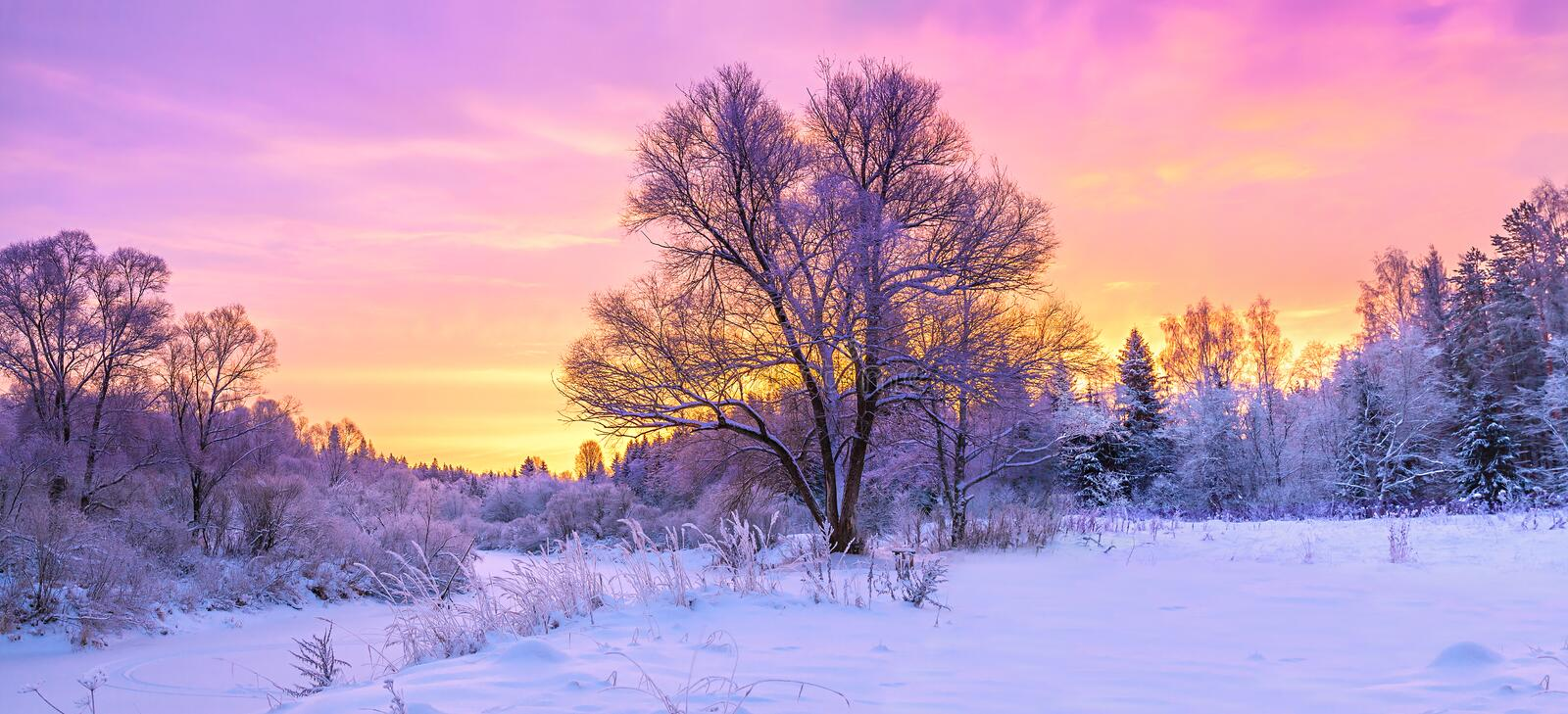 winter panorama landscape with forest, trees covered snow and sunrise. royalty free stock images