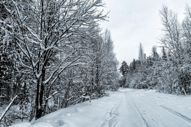 Winter panorama snow-covered forest, Russia, the Urals. Black and white landscape stock photos