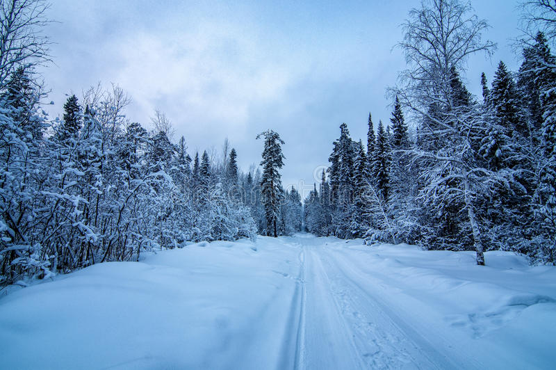 Winter panorama snow-covered forest, Russia, the Urals. Black and white landscape royalty free stock photography