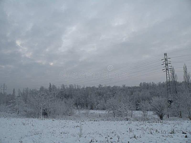 Sad nature winter panorama forest stock photo