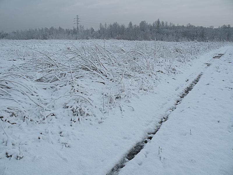 Sad nature winter panorama forest stock photography
