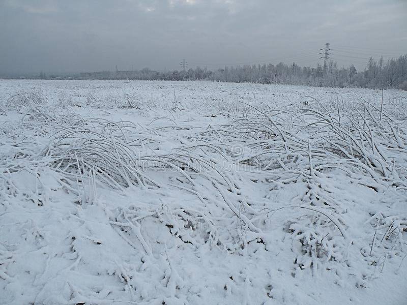 Sad nature winter panorama forest royalty free stock images