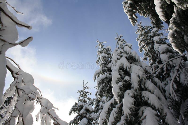 Winter paradise stock photos