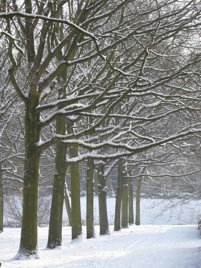Download Winter park stock image. Image of holiday, country, branch - 12549761