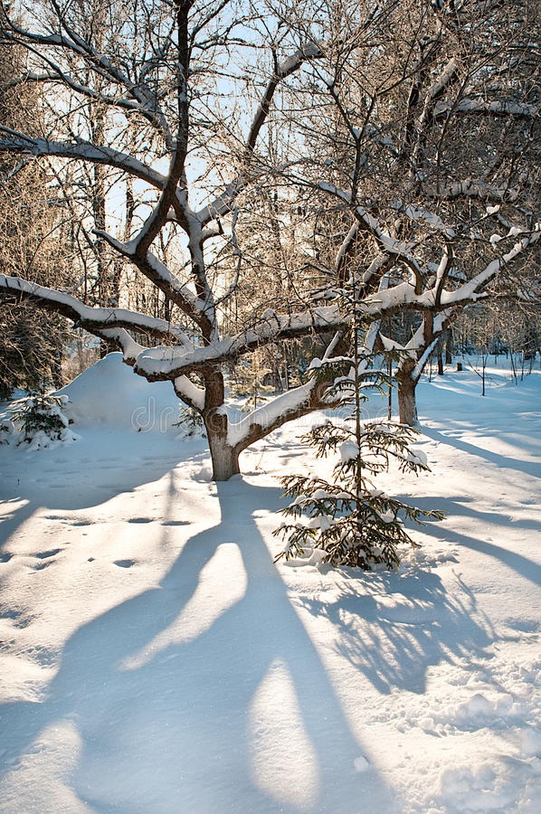 Download Winter in the park stock image. Image of fall, park, light - 13629475