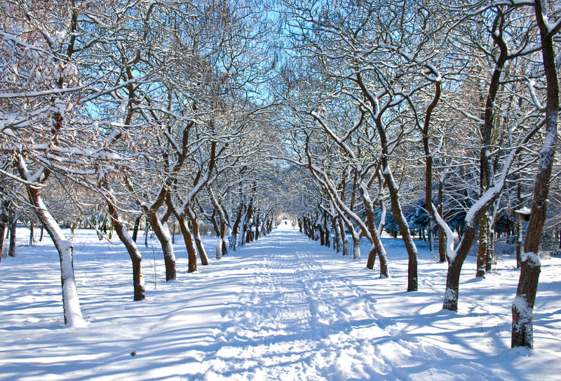 Download Winter park stock image. Image of winter, frost, garden - 14855039