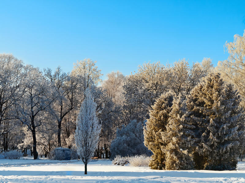 Download Winter park stock image. Image of outdoor, frozen, frosty - 16750111