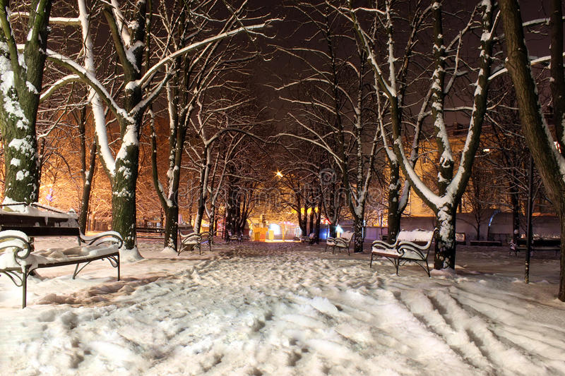 Download Winter park stock image. Image of night, lights, avenue - 17475187