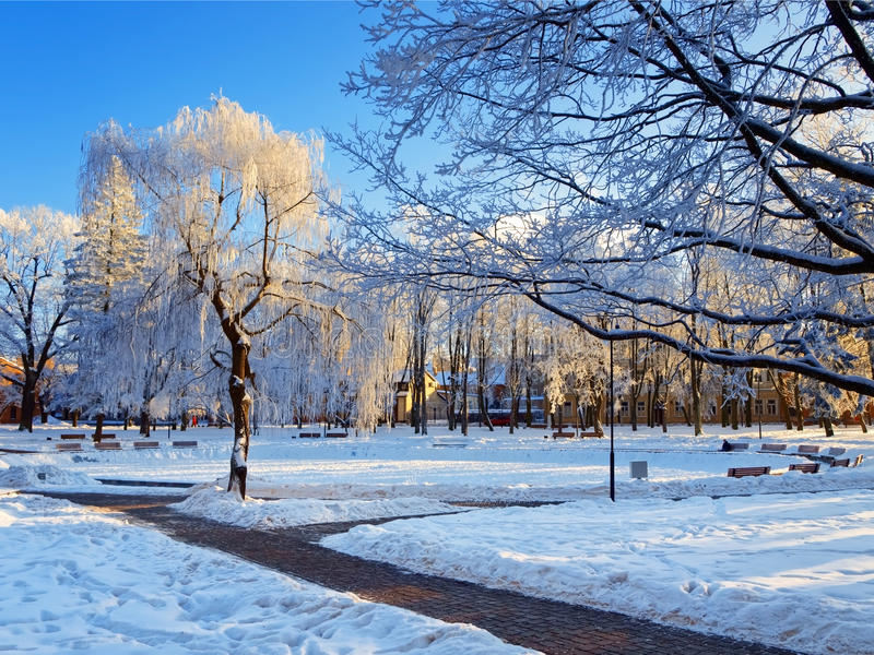 Download Winter park stock photo. Image of winter, wood, weather - 20937606