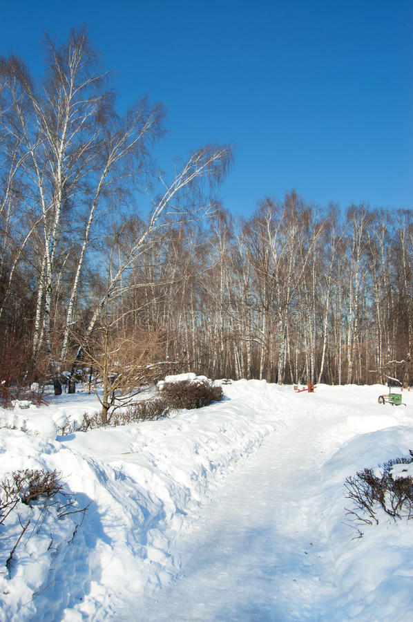 Download Winter in park stock image. Image of woods, frost, silence - 21739007