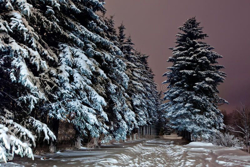Winter park royalty free stock photography