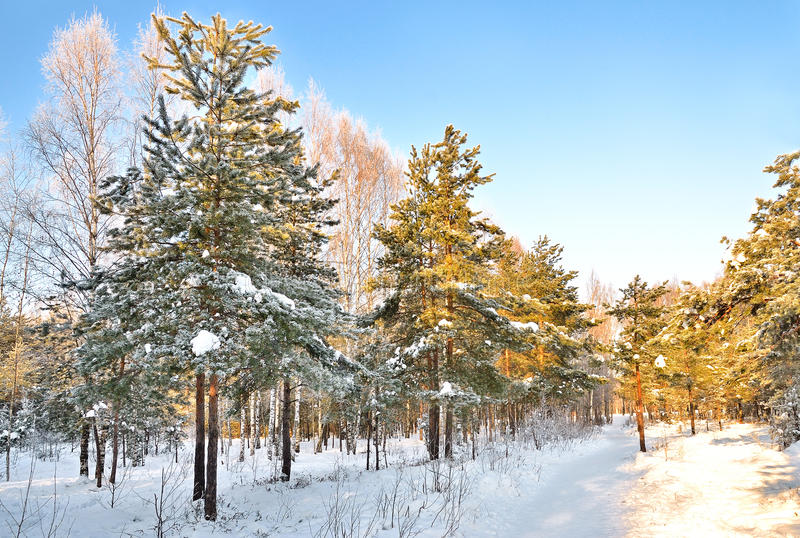 Download Winter park stock photo. Image of natural, trail, frozen - 23337998