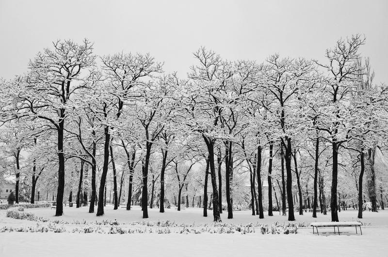 Winter In Park Stock Images