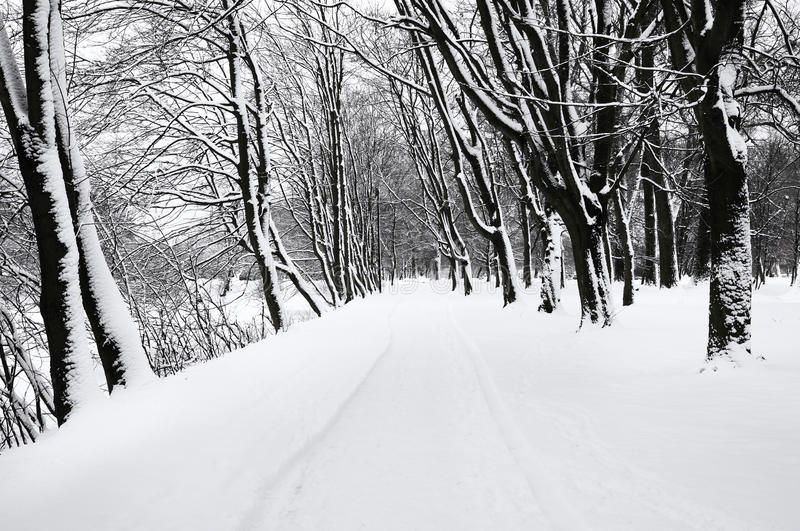 Download Winter Park Stock Photo - Image: 29323750