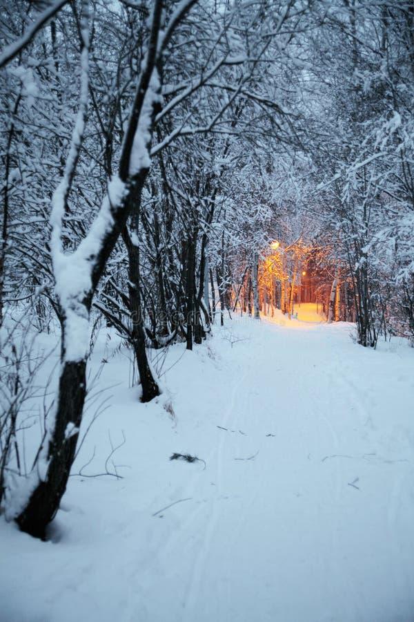 Download Winter park stock image. Image of lanterns, landscape - 7517295