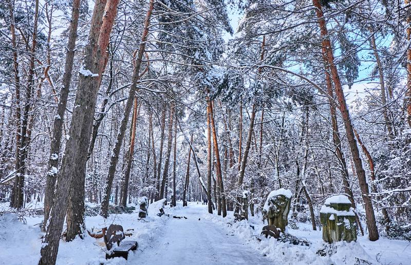 Winter park background with trees covered with white snow. stock photos