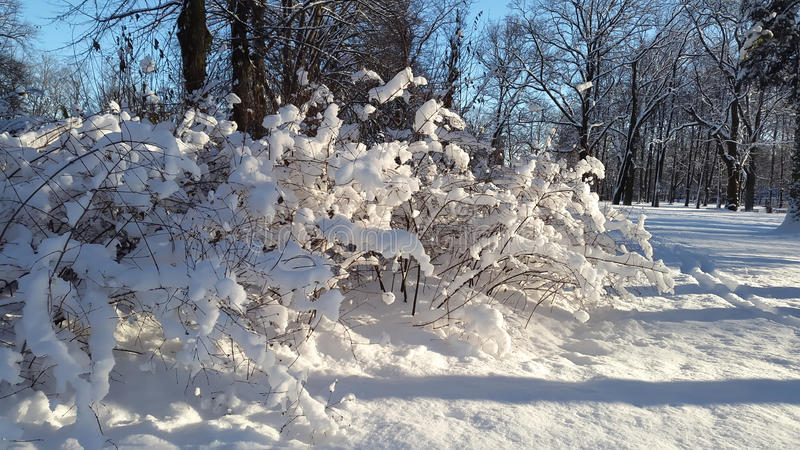 Winter in the park stock photo