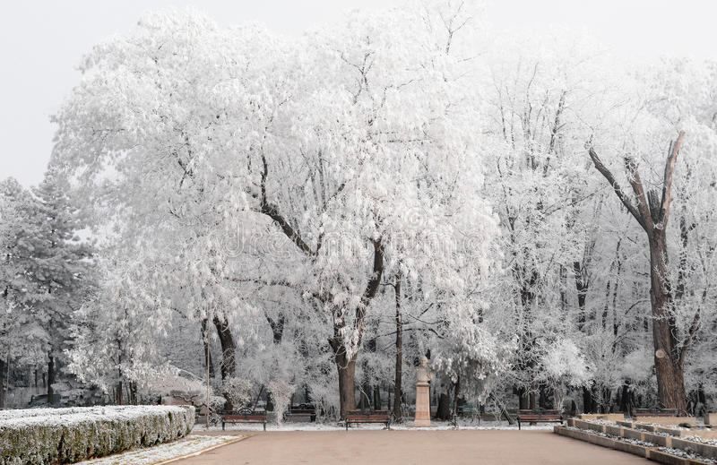 Winter landscape in the park. In Romania royalty free stock images