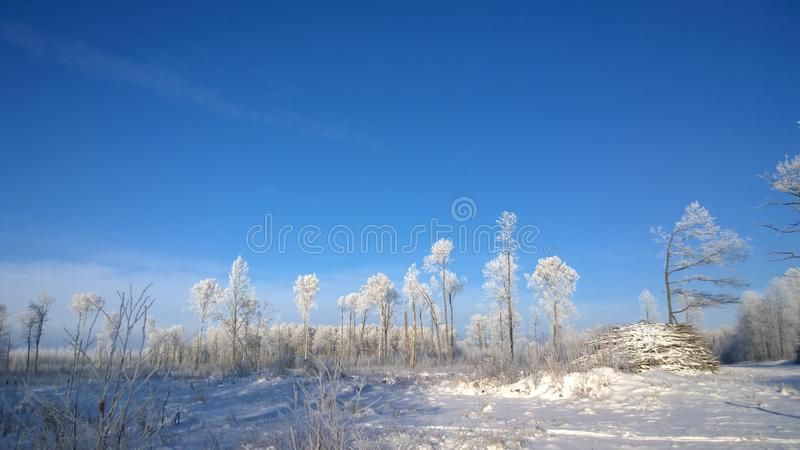 Download Winter Park Stock Photo - Image: 83702659