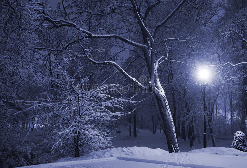 Winter park at night. Trees covered with snow, dark sky and shining lantern. Park scene. Night shot royalty free stock photography