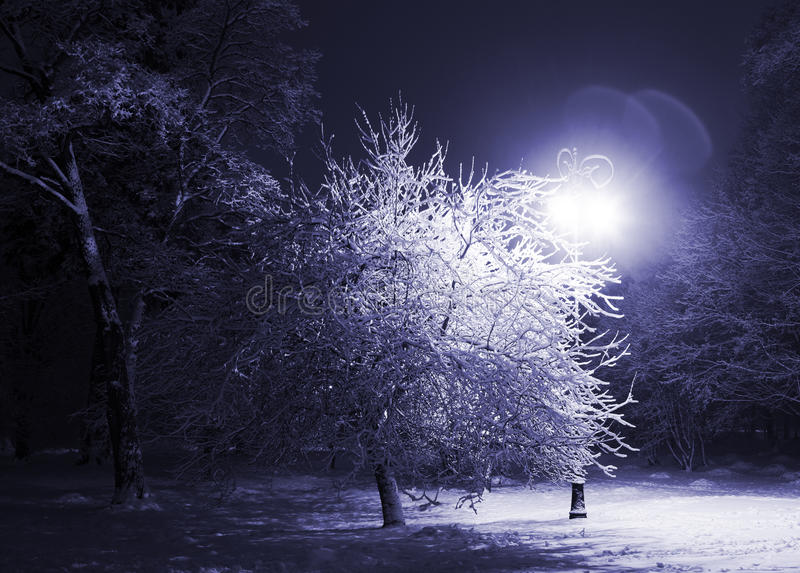 Download Winter park at night stock image. Image of scenics, snow - 17070621