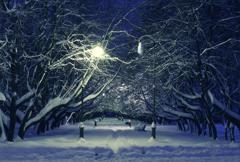 Winter park night scene royalty free stock photography