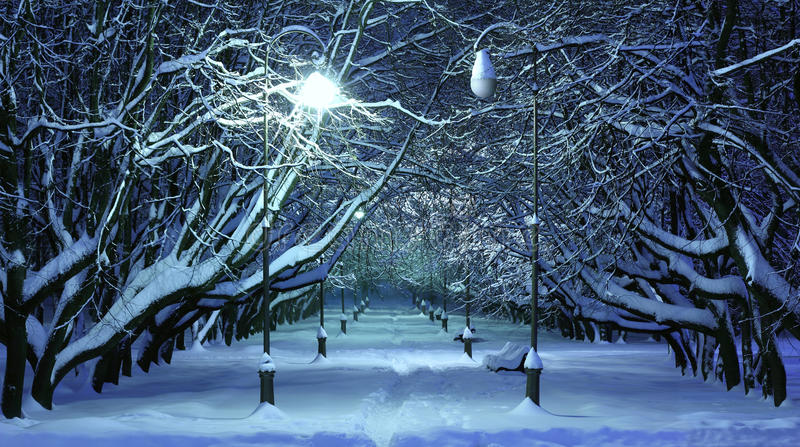 Winter Park Night Scene. Beautiful scene in winter park at night royalty free stock image