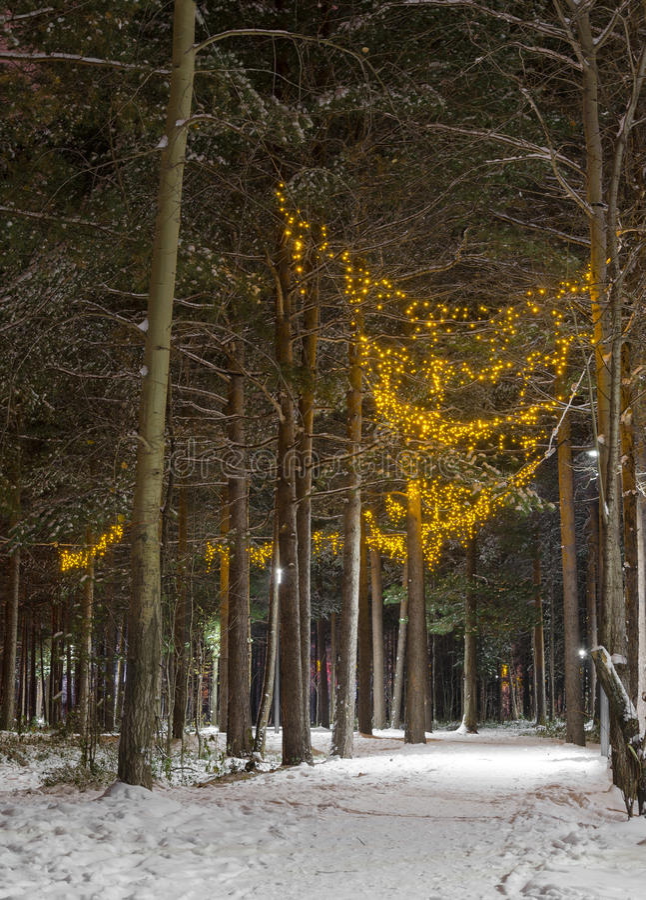 Winter park by night stock photos