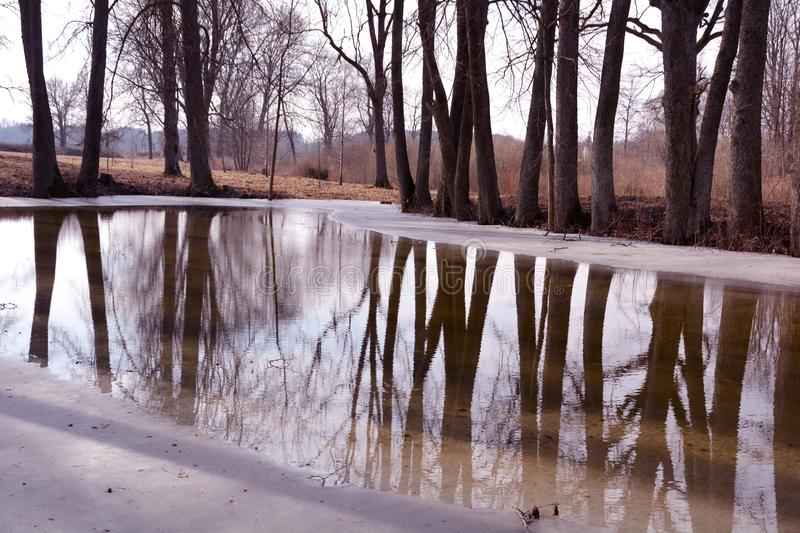 Winter park with old trees and pond with melt water. Winter park landscape with old trees and pond with melt water royalty free stock image