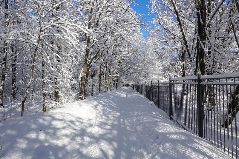 Winter Park. The road and trees are covered with snow. Iron fence and trees in the snow. Winter sunny frosty day stock image