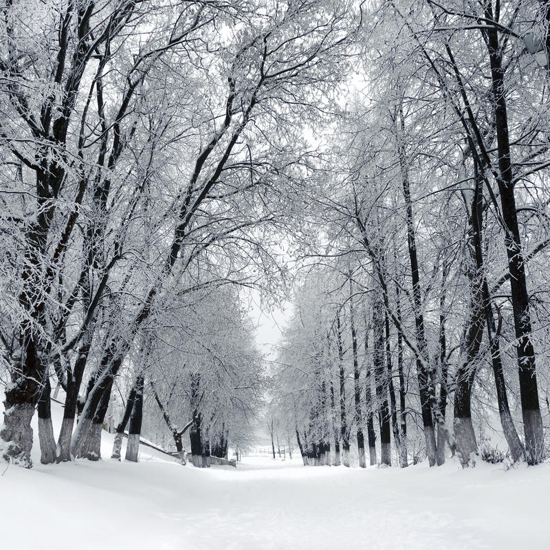 Winter park, scenery stock photography