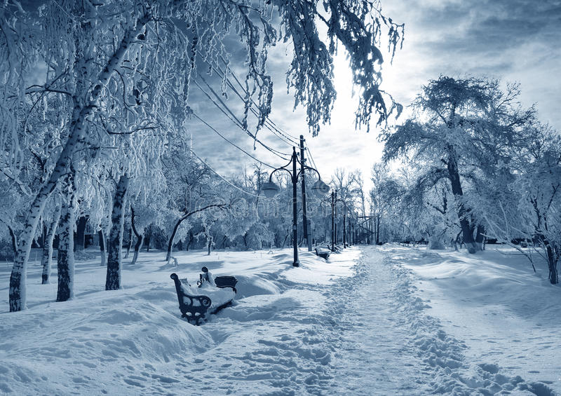 Winter park, scenery royalty free stock photography