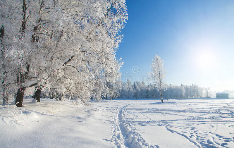 Winter park in snow royalty free stock photo